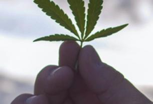 marijuana real estate profits